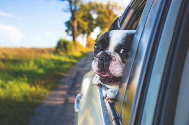 pes v okénku auta